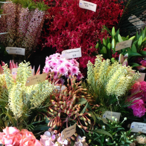 Featured Client: Jodie McGregor Flowers, Annandale NSW